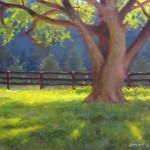 tree at hollybrook stables plein air carolina