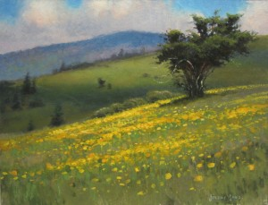 Wildflowers on Jane Bald plein air painting by North Carolina artist Jeremy Sams