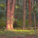 plein air painting of trees with evening sun illuminating by North Carolina artist Jeremy Sams
